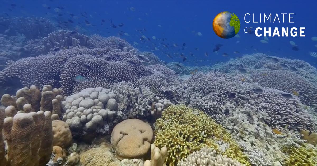 Terumbu karang hampir mati.  Tetapi masih ada masa untuk menyelamatkan mereka